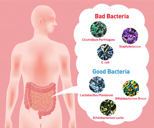How GOOD and BAD Bacteria Affect Our Health